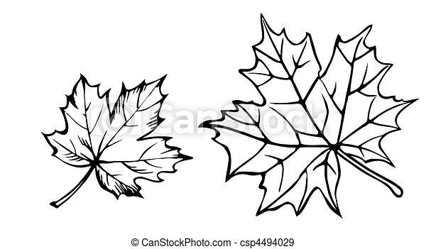 blad, vector, achtergrond, silhouette, witte , esdoorn - csp4494029