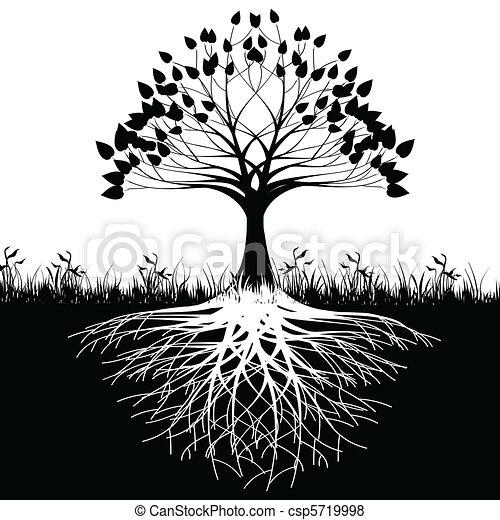 boomwortels, silhouette - csp5719998