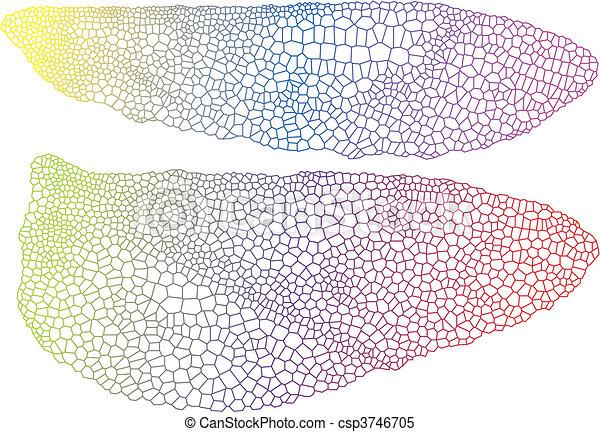 insect, vleugels, textuur, delicaat - csp3746705