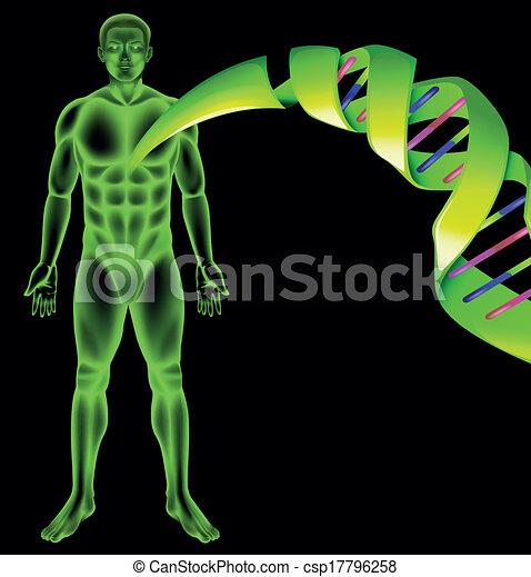 mannelijke , dna, menselijk - csp17796258