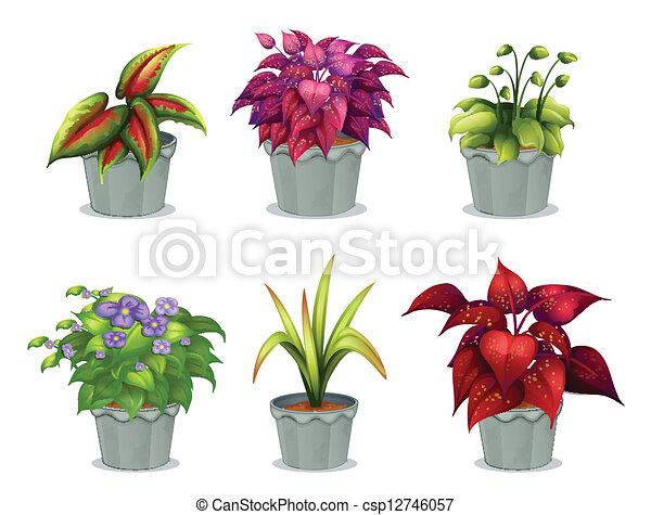 planten, anders, zes - csp12746057