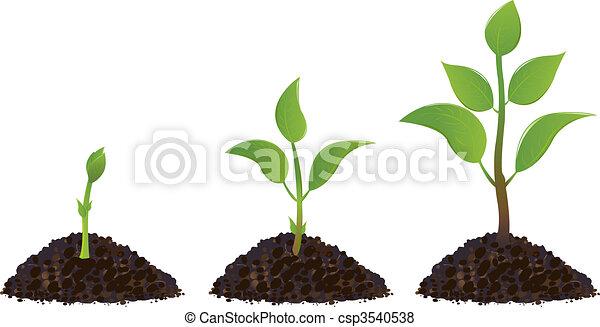 planten, groene, jonge - csp3540538