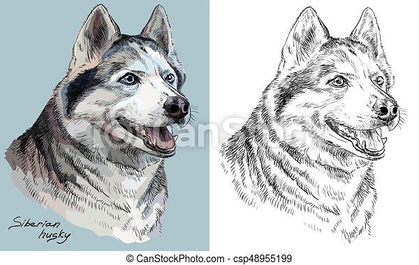 vector, husky, monochroom, verticaal, tekening, hand, kleurrijke, siberisch - csp48955199