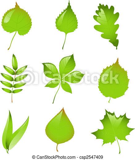 vector, set, vrijstaand, leaves. - csp2547409