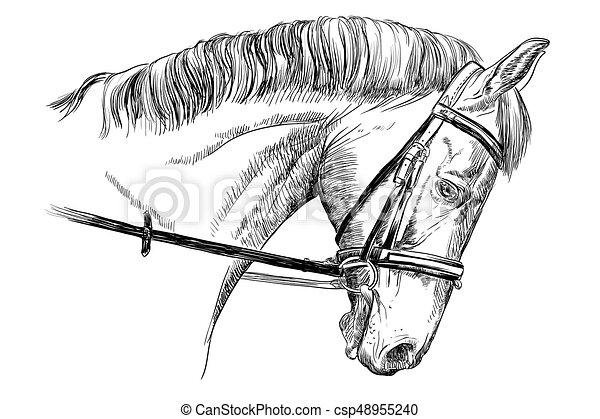 verticaal, toom, paarde - csp48955240