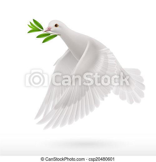 vlieg, duif - csp20480601